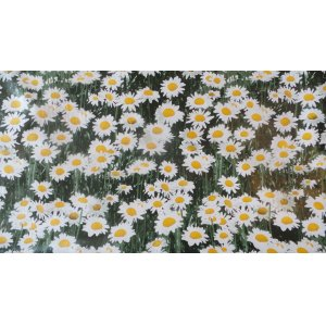 DAISIES PVC WIPE CLEAN PVC  TABLE COVERING 140CM WIDE PRICED PER METRE PLEASE CHANGE THE QUANITTY IN